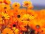 Flores de Bach para niños y adolescentes