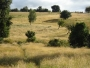 Fresia, 27,62 hectáreas, $50.000.000